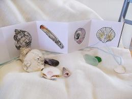 Seashell Book - Colour