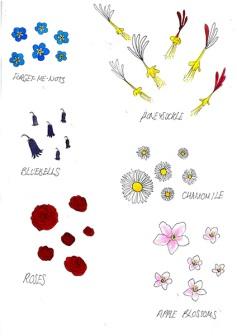 Flowers-01---Colours