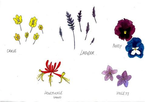 Flowers-02---Colour