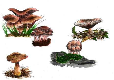 Brusho-Mushrooms-edit