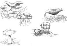 Mushroom-Illustrations-RVJ-01