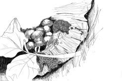 Mushroom-Illustrations-RVJ-02